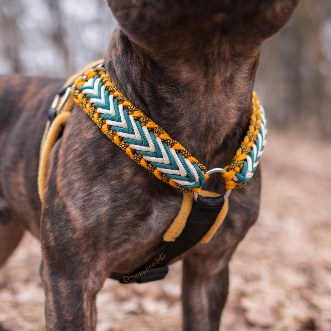 Pack & Harnesses